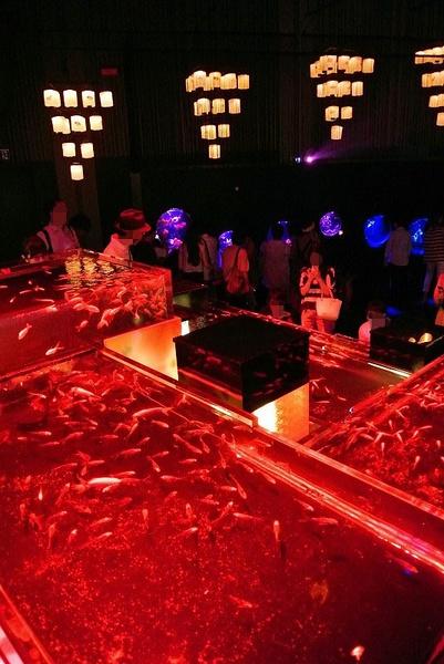 アートアクアリウム2013~江戸・金魚の涼~