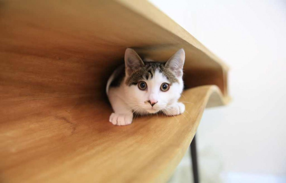 Modern-table-for-cats-5-994x637