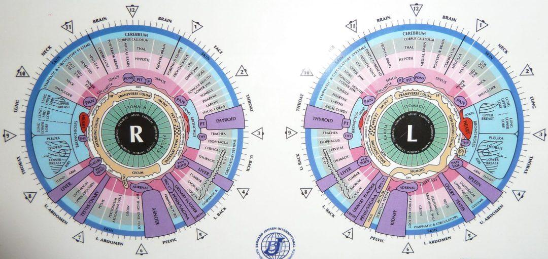 cartografia-de-iridología-barcelona