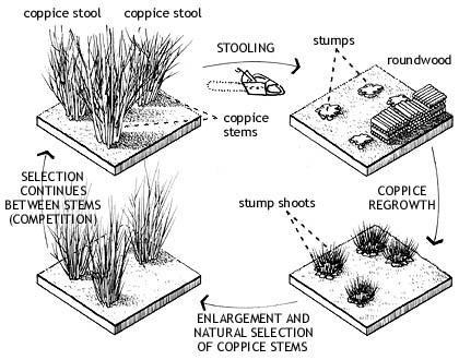 Foresting Strategies for Drylands: Slope