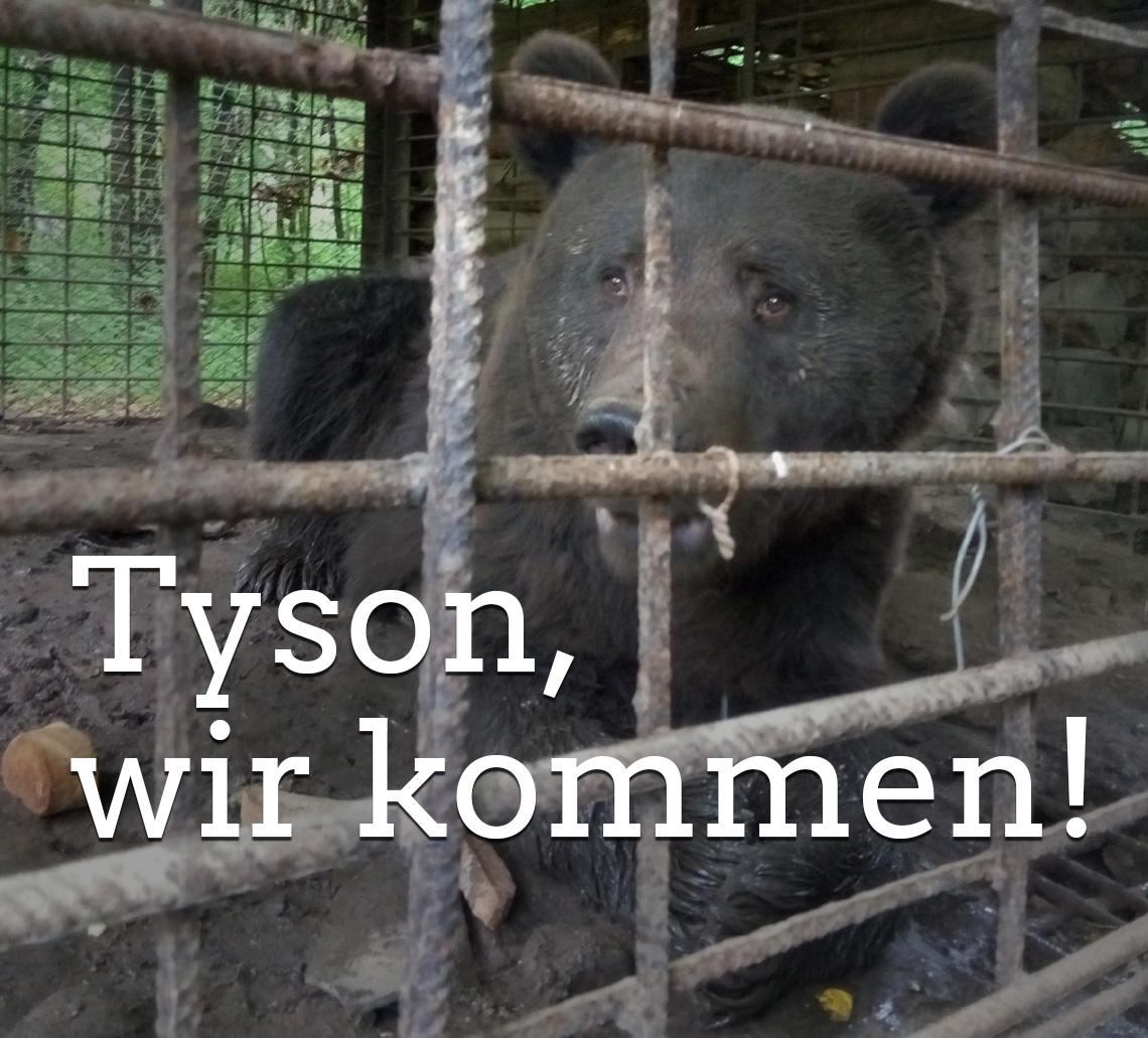 Rettung für Bär Tyson