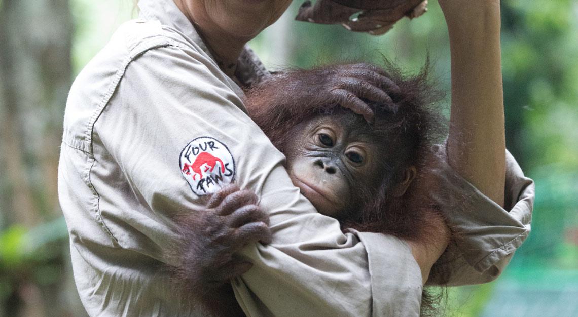 Primatologin Dr. Signe Preuschoft kümmert sich liebevoll um Baby Gonda.