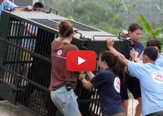 Film: VIER PFOTEN befreit Gallebären und bringt sie in den BÄRENWALD Ninh Binh.