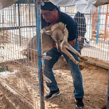 Auch Hunde waren unter den geretteten Tieren.