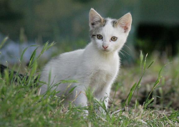 VIER PFOTEN hilft Streunerkatzen.
