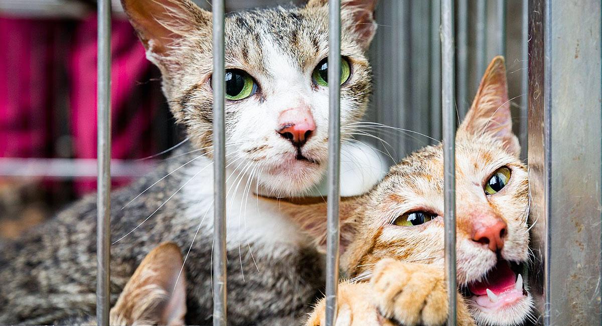 Helfen Sie den Katzen in Südostasien mit Ihrer Spende!