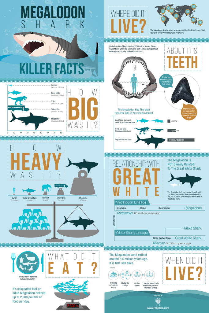 7 Amazing Facts About Megalodon Shark