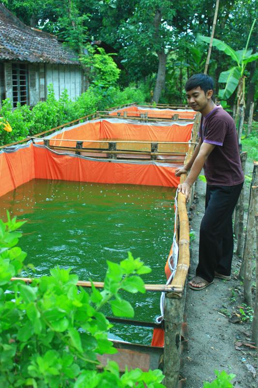 Budidaya Ikan Gurame Di Kolam Terpal : budidaya, gurame, kolam, terpal, Pakan, Gurame, Kolam, Terpal, Belajar, Agribisnis
