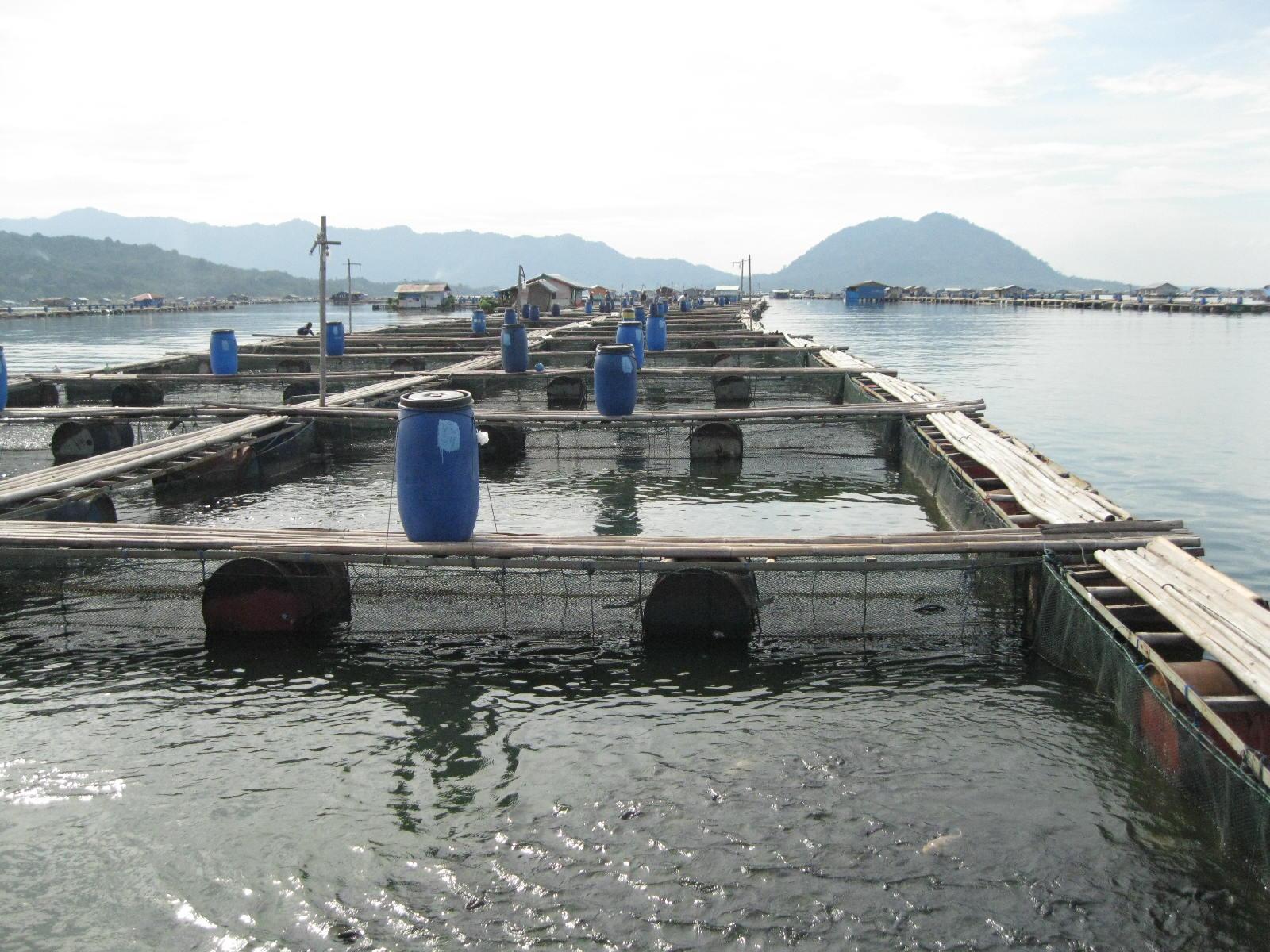 No Hp 0852 3311 1221 Distributor Keramba Jaring Apung Di Jawa Barat No Hp 0852 3311 1221 Distributor Keramba Jaring Apung Di Jawa Barat Tips Budidaya Ikan Nila di Jaring Apung yang Berhasil Umunya pembesaran ikan nila atau ikan lain di aliran sungai dan waduk menggunakan cara jarring terapung.
