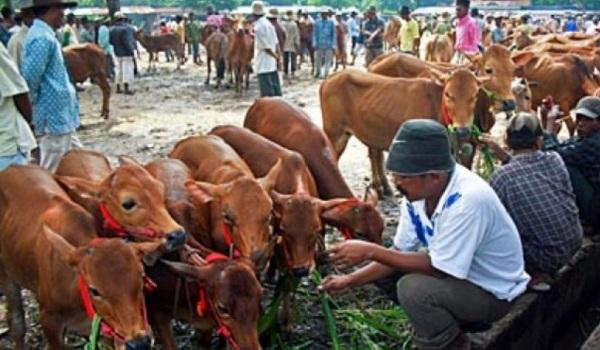 Ini Upaya Pemerintah Stabilkan Harga Daging