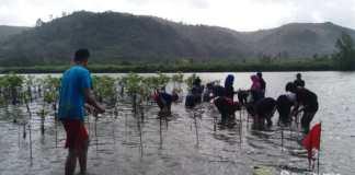 Menanam mangrove bareng di Pantai Pasur. Dokumentasi oleh Geber Film