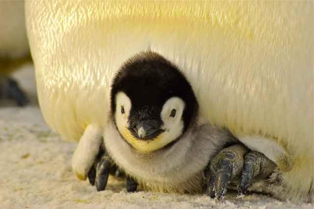 cold nature bird animal Instituto