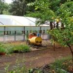 El municipio de Rosales realizó una reparación total del invernadero del Vivero de Pehuén Co
