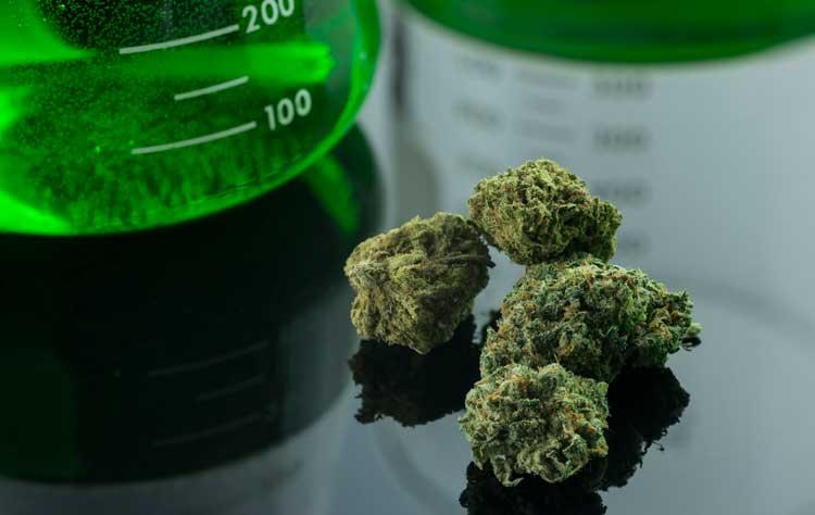Marijuana's Unknown Future
