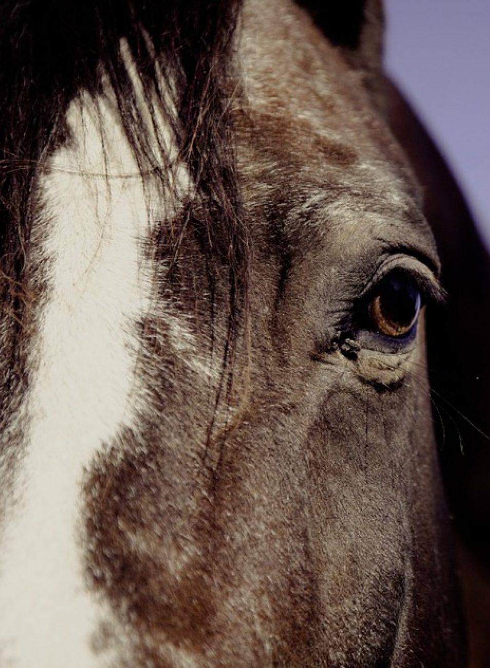cropped-cropped-horse-594191_960_720-OJO.jpg
