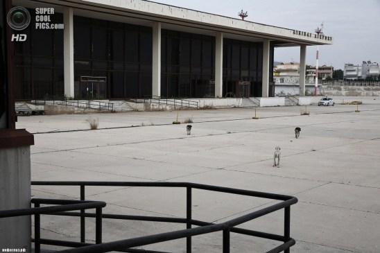 Греция. Афины. 16 июня. Дворняги — обитатели аэропорта. (REUTERS/Yorgos Karahalis)