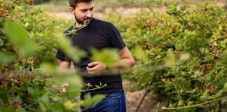 Trei generații au pus pe picioare o plantație de fructe de pădure în Gorj. Nepotul a dezvoltat afacerea, părinții au pus banii, bunica Mărioara coordonează muncitorii