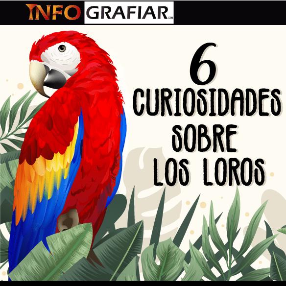 6 Curiosidades sobre los loros