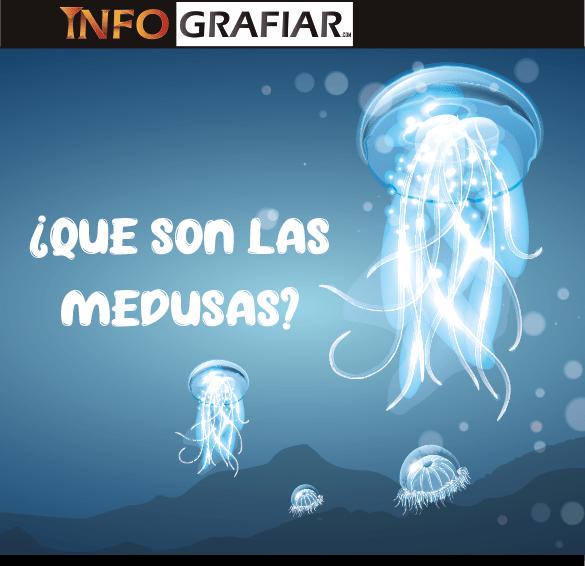 ¿Qué son las medusas?