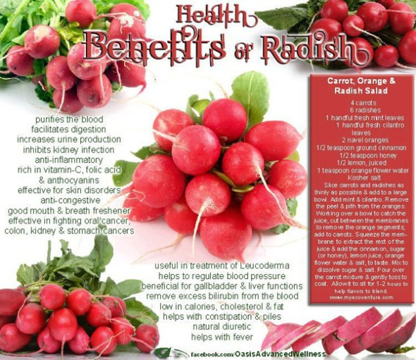 Health Benefits of Radishes