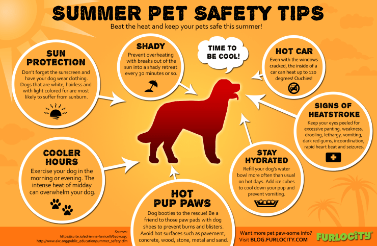 furlocity-summer-pet-safety-tips