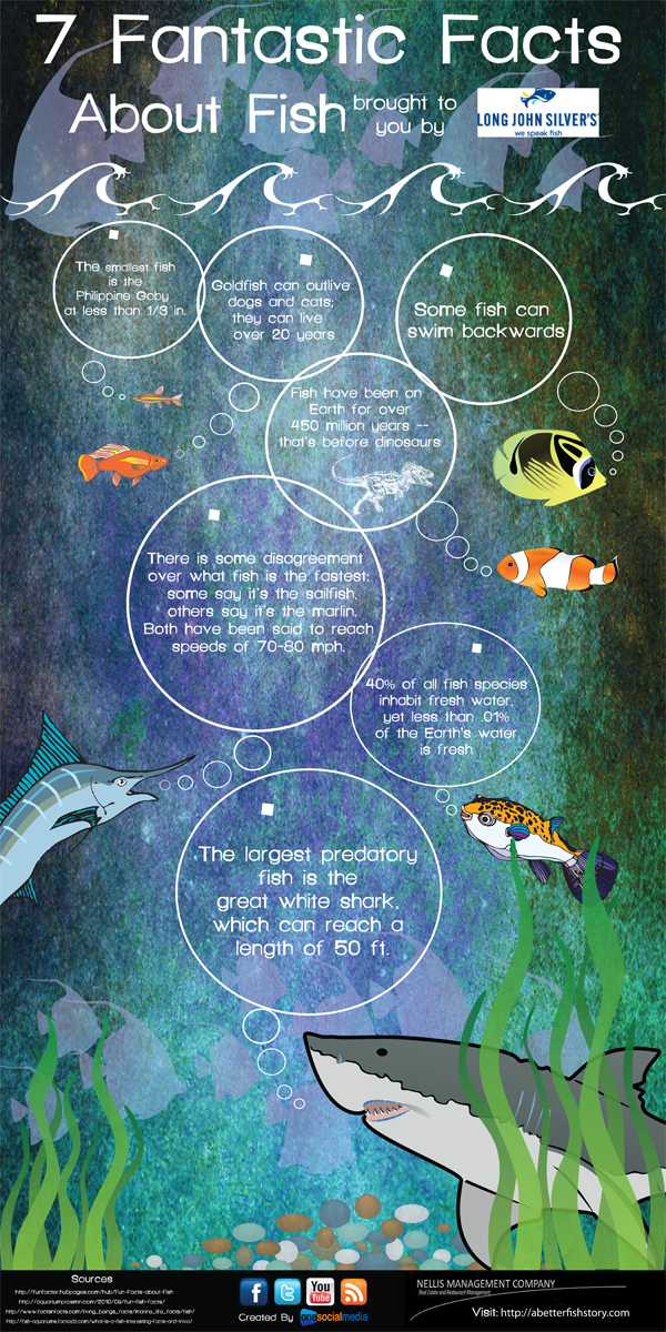7 fantastic facts about fish infographic infographic list for 7 fishes list