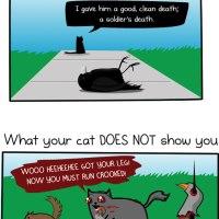 Cats Love Murder