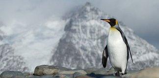 penguin algorithm changes