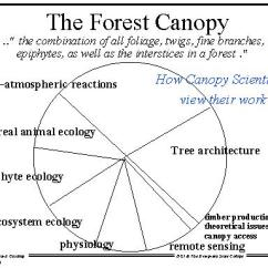 Forest Canopy Diagram Water Pressure Switch Wiring The