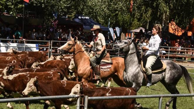 Caballos de primer nivel en el predio de la Sociedad Rural en Junín