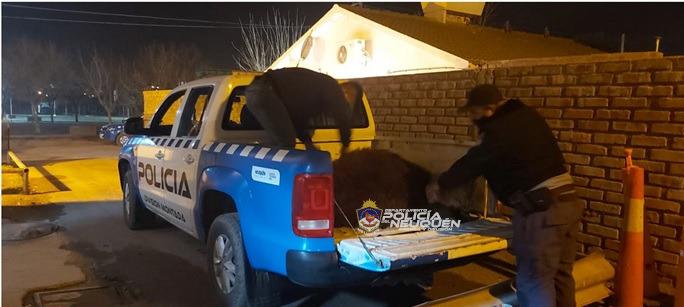 Policías demoran a dos hombres y recuperan un ternero sustraido
