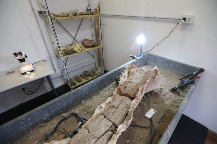 Neuquén tiene un Laboratorio de Investigación en Arqueología y Paleontología