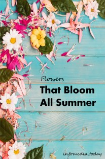 Flowers That Bloom All Summer