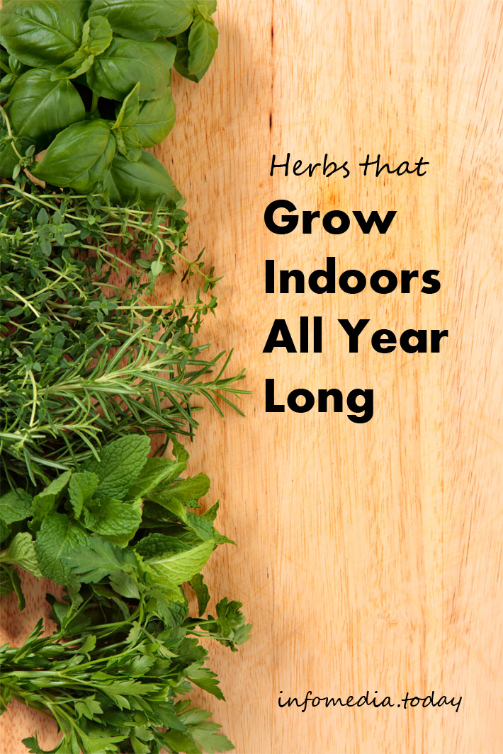 Herbs That Grow Indoors All Year Long