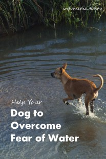 Help Your Dog to Overcome Fear of Water