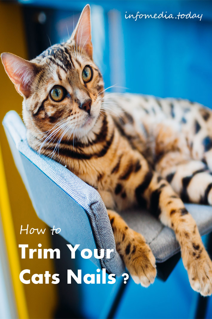 How to Trim Your Cat's Nails ?