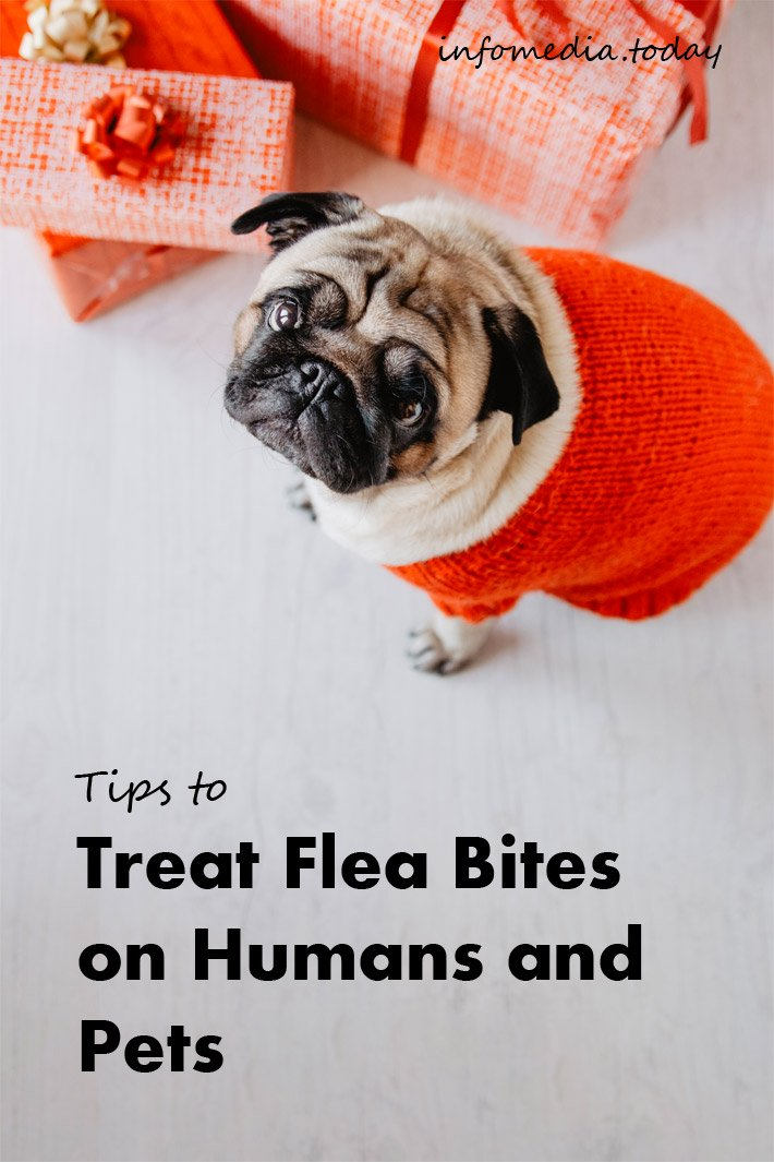 Tips to Treat Flea Bites on Humans and Pets