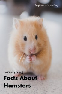 Interesting Facts About Hamsters