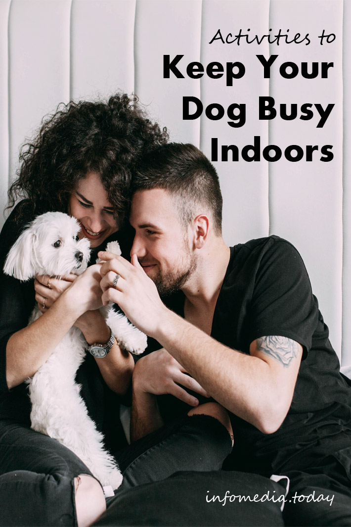 Activities to Keep Your Dog Busy Indoors
