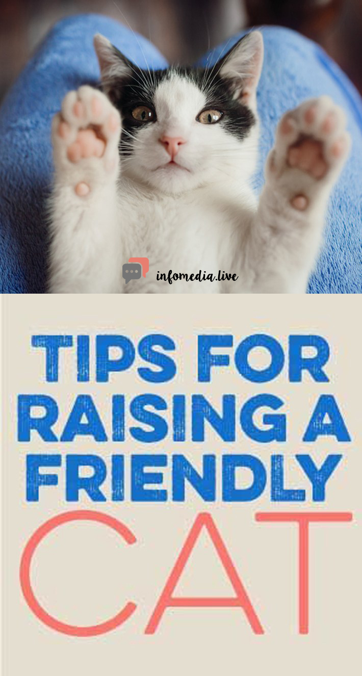 5 Tips To Raise A Friendly Cat
