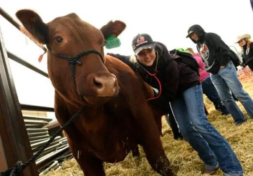 Veterinary TechnicianJob Vacancies Canada