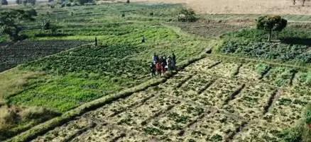 strawberry plantation in Jos