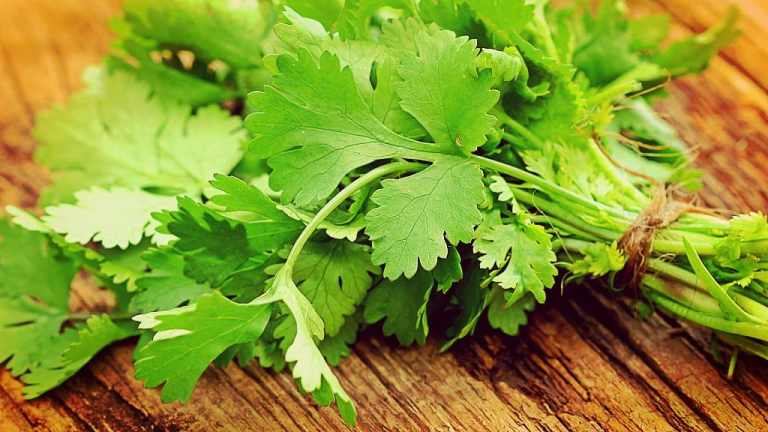 Los beneficios poderosos del cilantro