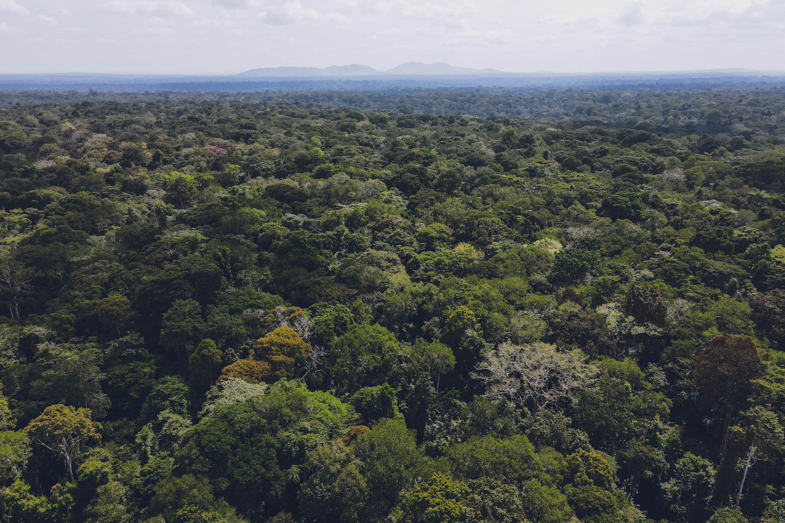 Aerial View of Bugoma Forest Drone view