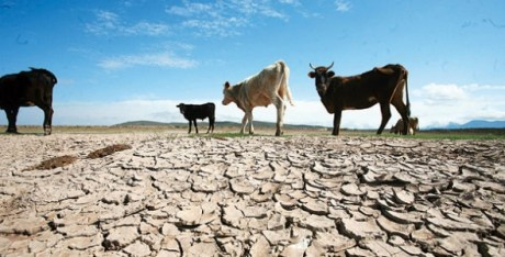 Pese a las recientes lluvias en el Estado, para los ganadores no han sido suficientes.