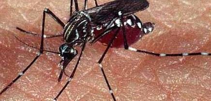 Confirma sector salud, otra muerte por dengue en Sonora