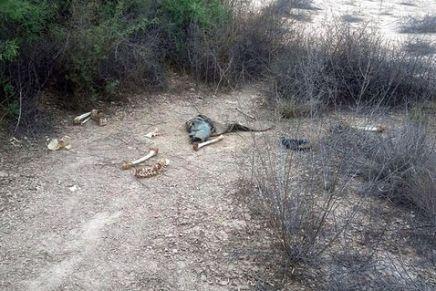 Encuentran restos humanos cerca del Recinto Fiscal, pudieran pertenecer al de una mujer