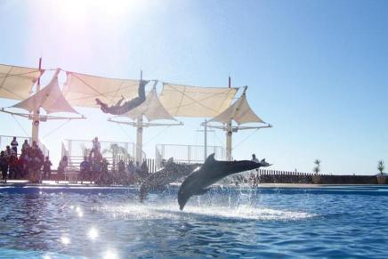 Listo Delfinario Sonora para recibir delfines: Luis Carlos Romo Salazar