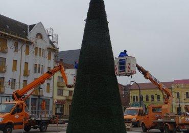 S-a montat bradul ecologic in Piata Unirii. Firma Luxten l-a oferit gratuit oradenilor. FOTO