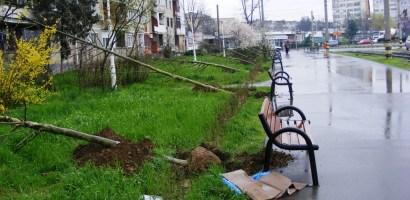 Primaria Oradea va planta 208 arbori in aceasta primavara. Vezi unde vor fi plantati acestia